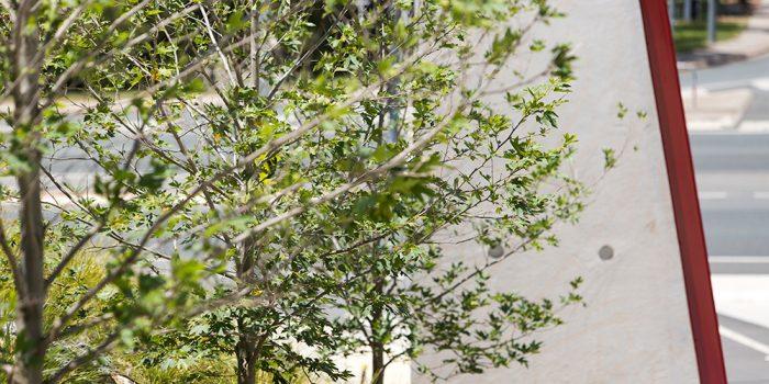 Radford College Landscaping